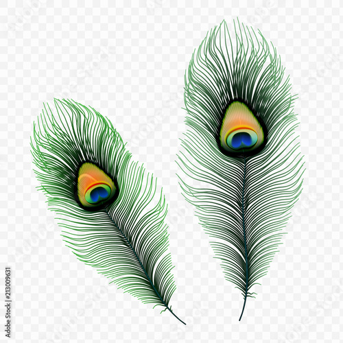 Stock vector illustration peacock feather isolated on a transparent background. EPS10