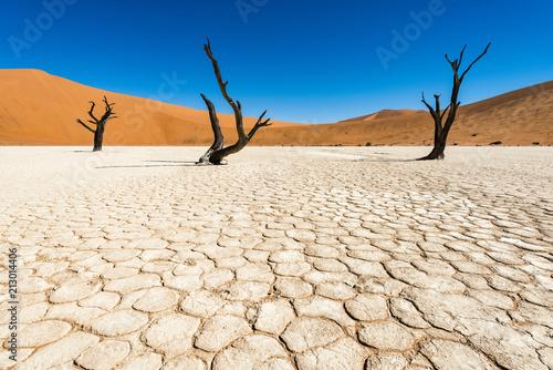 Obraz Deadvlei, Namibia - fototapety do salonu