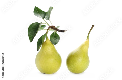 Fresh ripe pears with twig and leaves isolated on white background