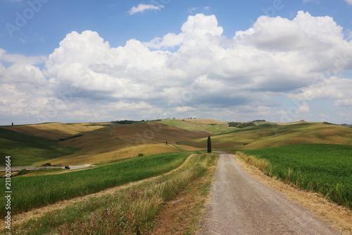 Poster Onweer Paesaggio Toscano, val D'orcia, colline e cipressi