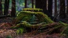 Altar Of Nature - Altar Der Natur