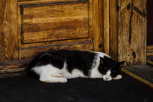 Black And White Cat Sleeps Next To A Wooden Door On The Street