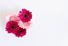 Paquerettes Fushia Et Rose