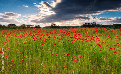 Foto op Aluminium Poppy Poppy Field under cloud / A poppy field full of red poppies in summer near Corbridge in Northumberland