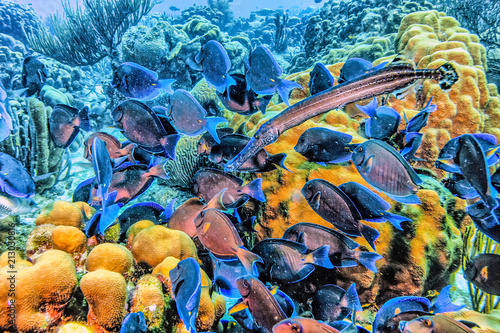 Caribbean coral reef Poster