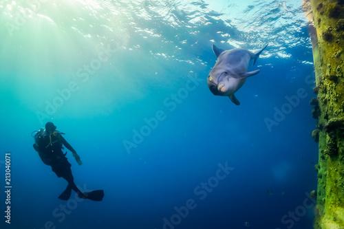 Obraz na dibondzie (fotoboard) Delfin morski