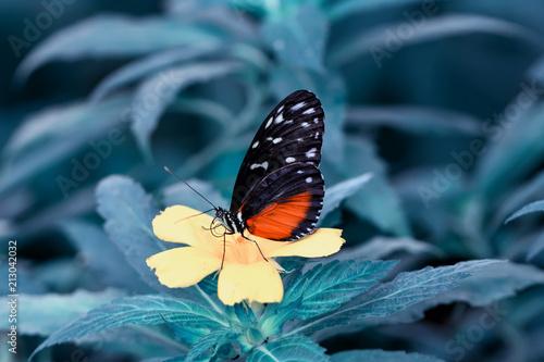 Fotografie, Obraz  Closeup  beautiful butterfly  & flower in the garden.
