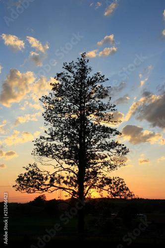 Plakát  Bäumepräsentieren sich  im Abenrot