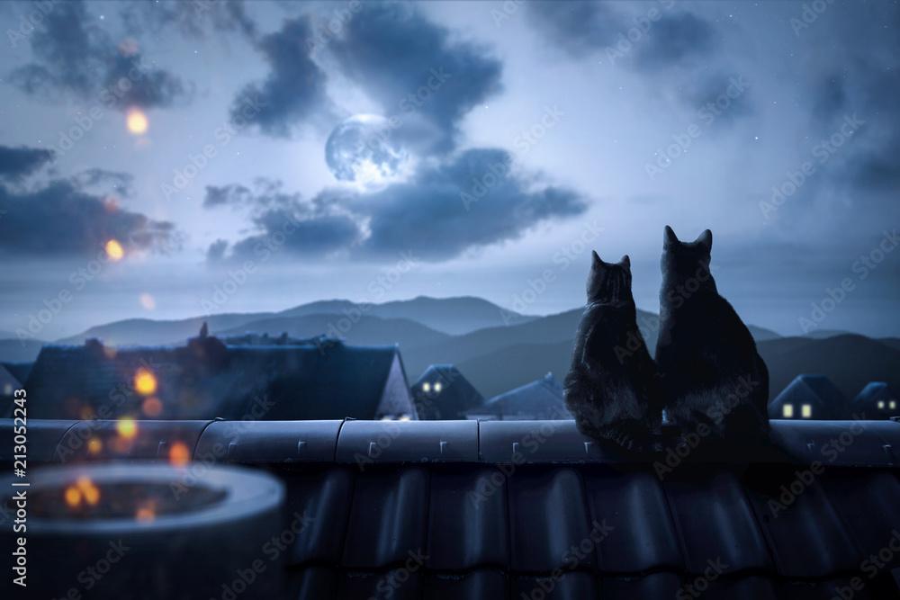 Fototapeta Katzen sitzen auf einem Dach in der Nacht