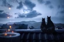 Katzen Sitzen Auf Einem Dach I...