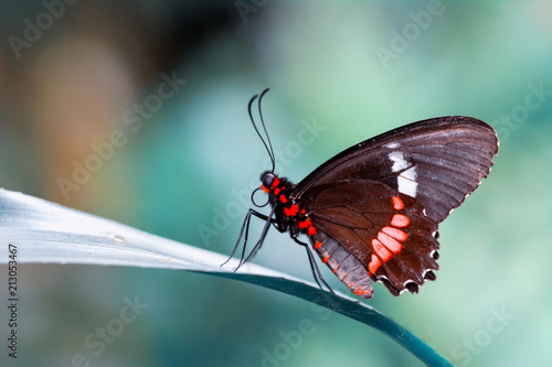 Recess Fitting Butterfly Closeup beautiful butterfly & flower in the garden.