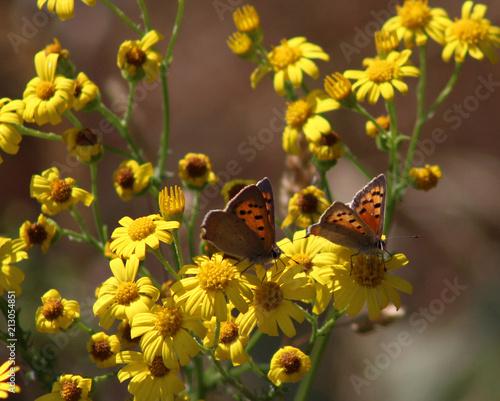 Foto auf Leinwand Schmetterling Gele bloemen en witte vlinder