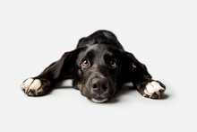 Sad Puppy With Puppy Dog Eyes