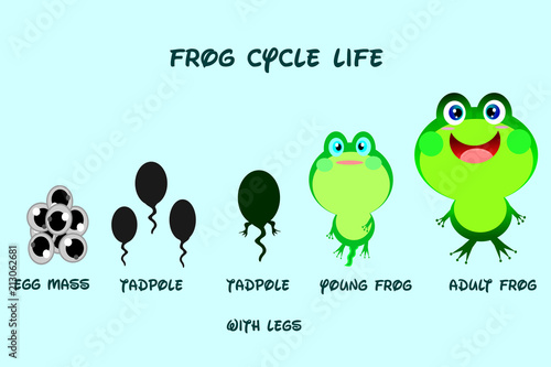 Valokuva Frog life cycle,cartoon style,Animals life vector.