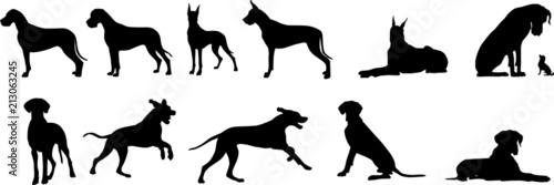 Fototapeta Deutsche Dogge - Silhouetten obraz