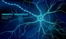 Human Neuron Low Poly Anatomy ...