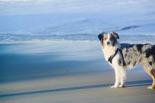 Aussie At The Beach