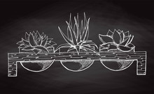 Sketch Three Succulents In Pots On A Wooden Stand Isolated On The Chalkboard. Vector Illustration