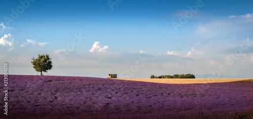 Tuinposter Lavendel Lavande à Valensole