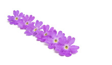Verbena Flowers Isolated