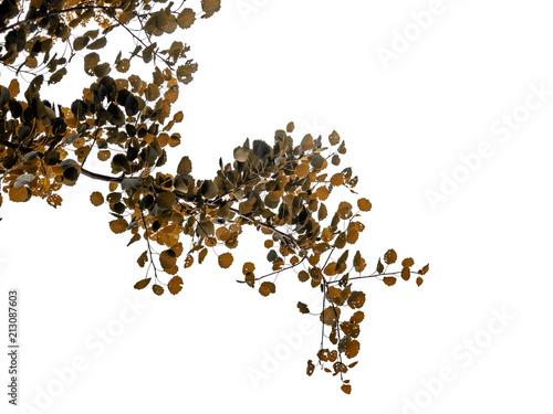 Fotografia  Freigestellter Zweig mit Blättern