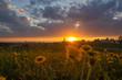 Löwenzahn im Allgäu bei Sonnenuntergang