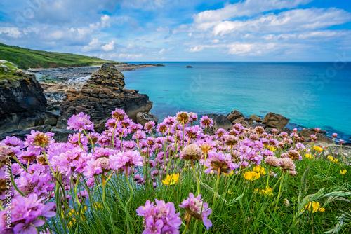 Pink sea thrift flowers on the sea coast © Pav-Pro Photography