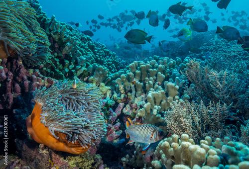 Staande foto Koraalriffen Coral reefs in Tanzania on Pemba Island with coral reef fish