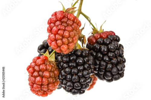 Berries of blackberry, lat. Rubus fruticosus, isolated on white background