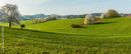 Fotobehang Landschap Panorama photo of rural landscape in spring. Blossoming trees, green fields on sunny morning.