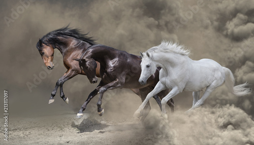 Canvas-taulu Bay, black and white horses runs in the dust storm