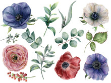 Watercolor Eucalyptus, Anemone And Ranunculus Floral Set. Hand Painted Blue, Red And White Anemone, Berry, Eucalyptus Leaves And Branches Isolated On White Background. Illustration For Design, Print.