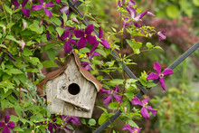 A Rustic Birdhouse Tucked Into...