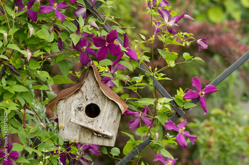 Canvas Print A rustic birdhouse tucked into a flowering clematis vine
