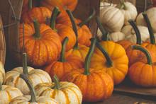 A Pile Of Mini Pumpkins For Sa...
