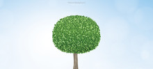 Abstract Round Of Green Tree With Blue Sky And Soft Light Background. Vector.