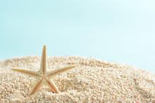 ヒトデ サンゴ砂   ...