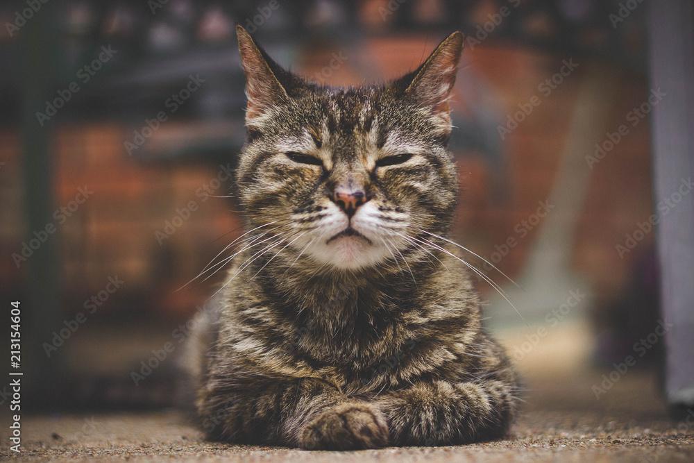 Fototapeta Cat Relaxing Outside