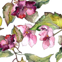 Colorful Gardenia Flowers. Flo...