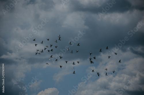 Birds Flying Poster