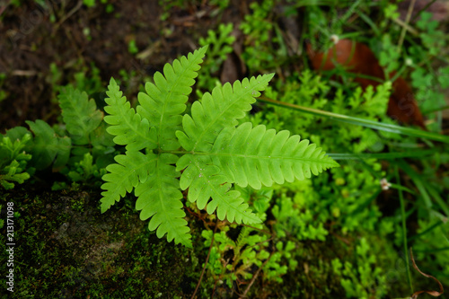 Ferns and other plants of the forest. Natural fern leaf decor closeup photo. Tropical greenery top view. Fern leaf pattern. Green foliage with green fern leaf.