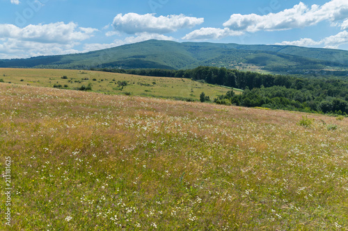 Foto op Canvas Blauw carpet of wild flowers and far away mountain slopes