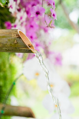 Violet orchid with handmade waterfall bamboo hanging in garden. Japanese style.