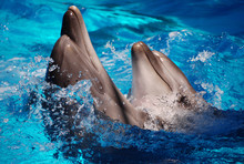 Two Lovely Dolphins That Are D...