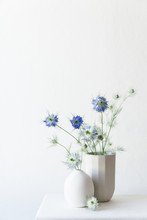 White And Subtle Blue Blooming Nigella Flowers In A Small White Vase And Bigger Grey Vase.