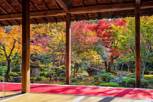 Fototapeta premium Kolorowi liście w jesień parku, Japonia.