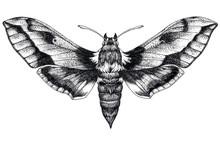 Hand Drawn Butterfly Tattoo. D...