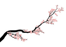 Blooming Cherry Tree Branch - ...