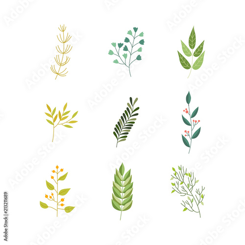 Fototapety, obrazy: Vector flat abstract green plant herb set icon. Wild meadow field garden spring easter women day romantic holiday wedding invitation card decoration element summer floral Illustration white background