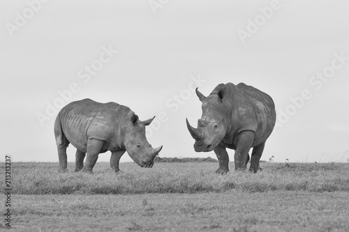 Montage in der Fensternische Nashorn White Rhinoceros